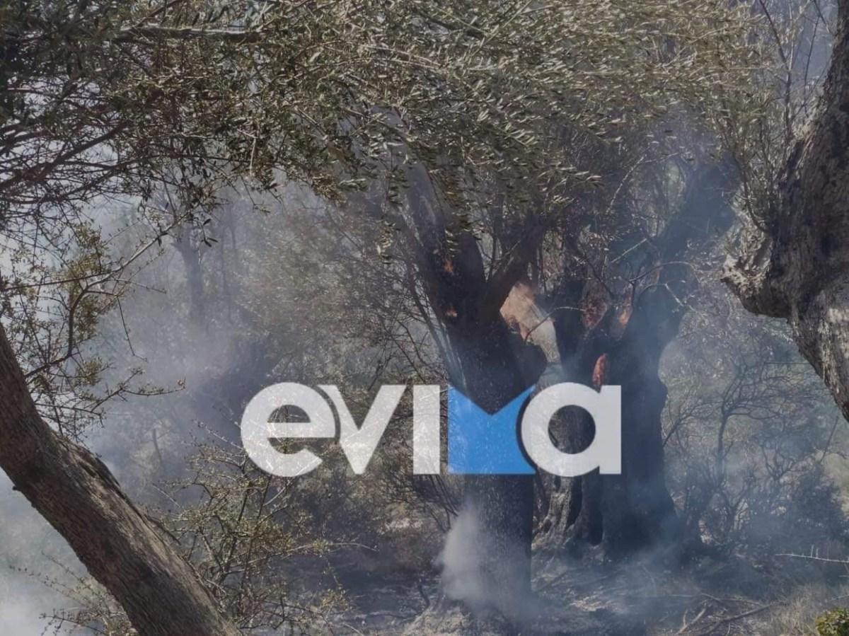 Εύβοια: Φωτιά στον Αγ. Αθανάσιο του Δήμου Διρφύων Μεσσαπίων [εικόνες]