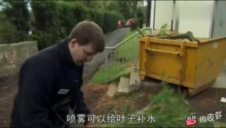 国宝大熊猫去了英国,简直无法无天!!!