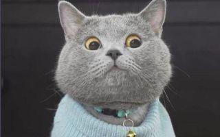 【猫咪】我一定是一只假猫_标清