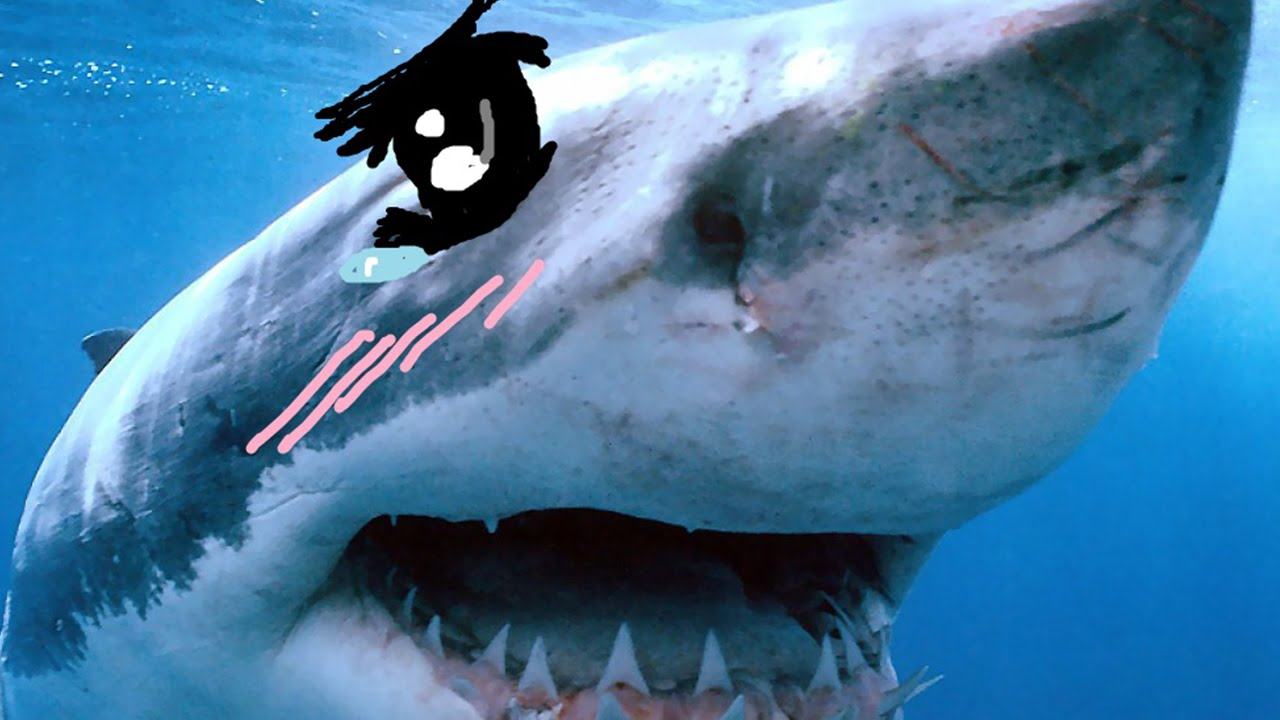 Tsundere Sharks Know Your Meme