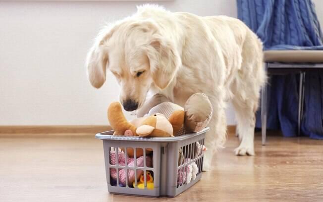 cachorro vendo brinquedos dentro do cesto