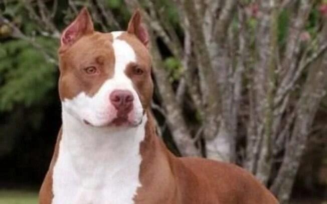 10 raças de cães bravos para ficar atento