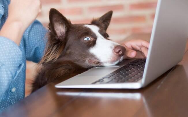 cachorro com a cabeça em cima do computador