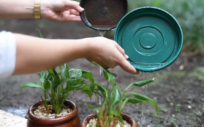 Vasos de plantas com água acumulada são um dos muitos criadouros do mosquito Aedes aegypti