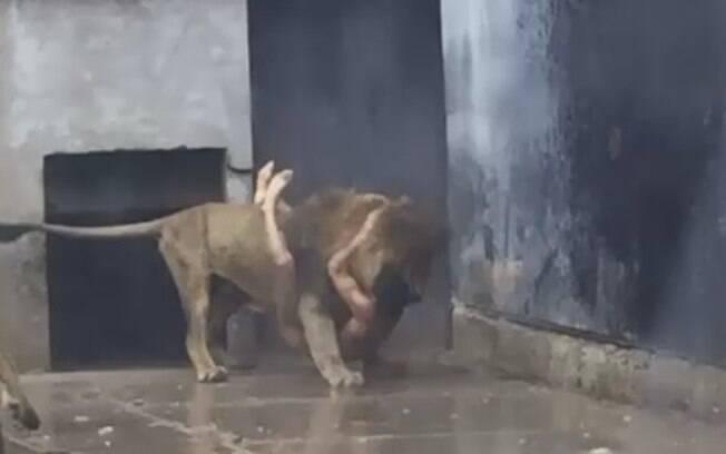Segundo o zoológico chileno, atirar nos dois leões foi a única forma de salvar a vida do jovem