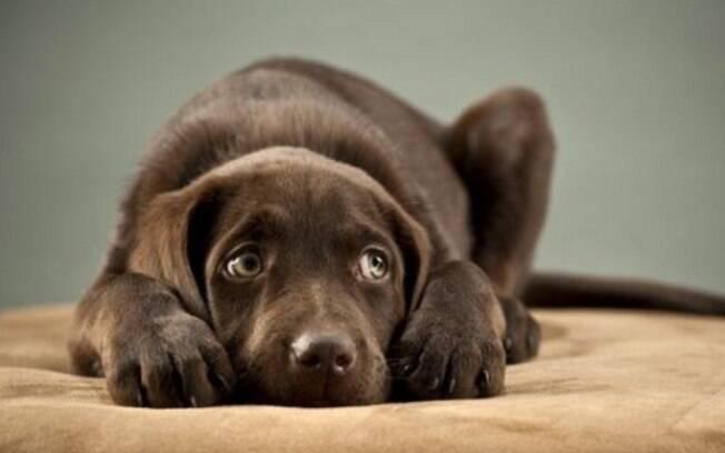 A mistura cachorros e fogos de artifícios pode ser perigos