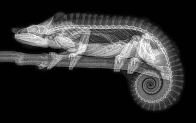 Imagens de raio-x de animais viralizaram após publicação do Oregon Zoo; confira todas. Foto: Divulgação/Oregon Zoo