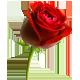 Red Rose de ! ! Raymond R a Isabel Gaviota  En Ejercito de Dios