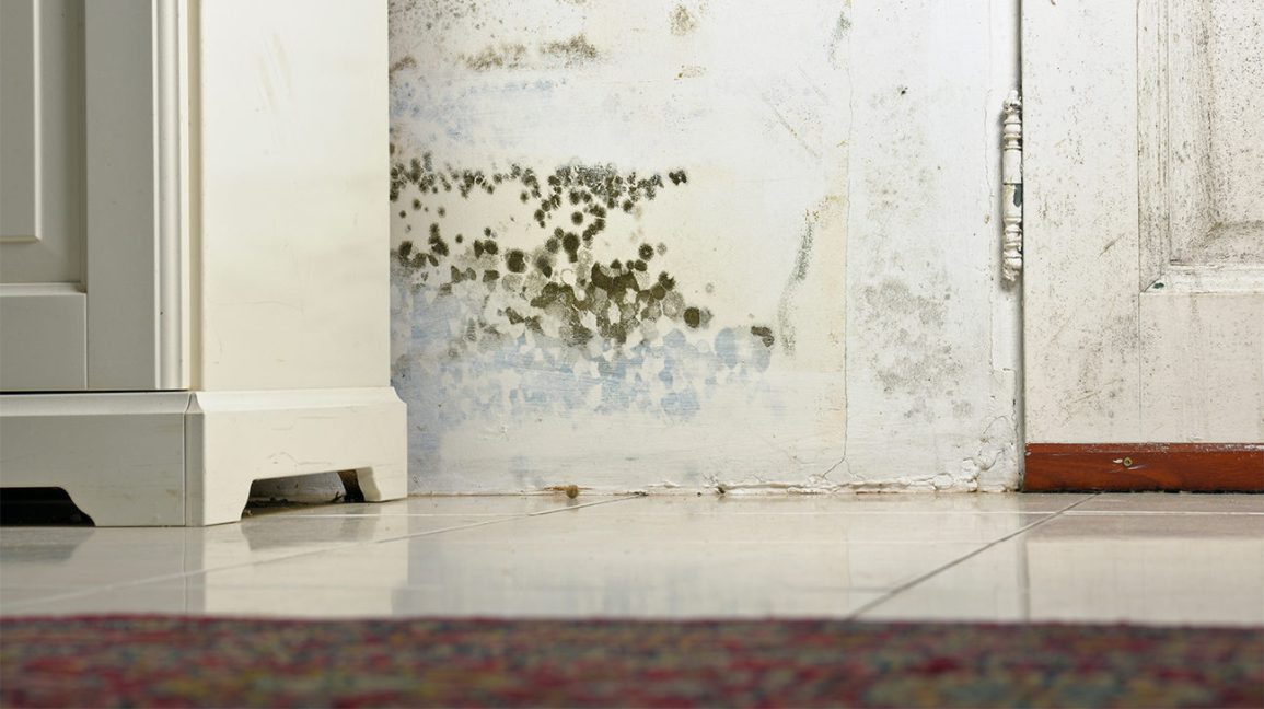 can black mold kill you fortunately