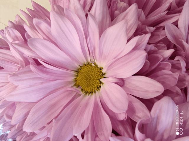 Thème de la semaine #Fleurs