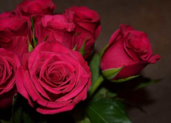 Картинка для рабочего стола: букет, розы, розовые