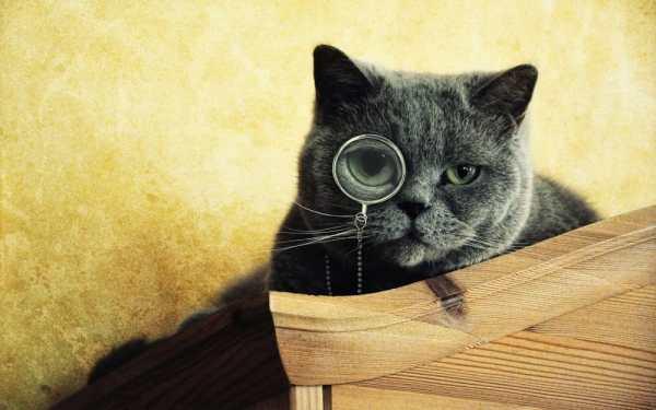 Обои для рабочего стола: интелигент, смотрит, очки, кот