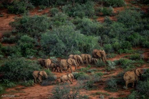 Ami Elephants