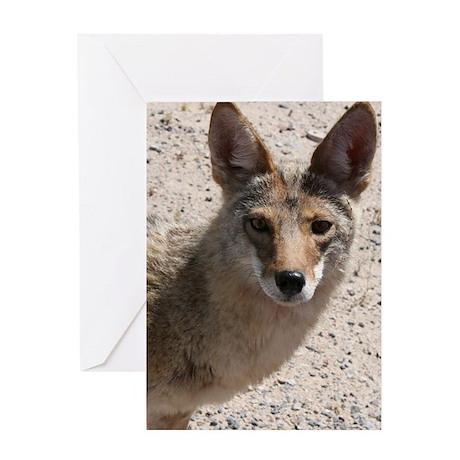 Coyote Grußkarte