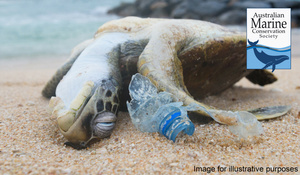 Turtle dying plastic