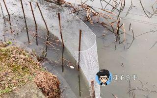 小伙承包了这个藕塘,今天来砍树,围栏网,就为了保护资源