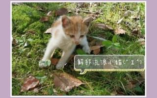 【小猫咪】我的新朋友-奶酪