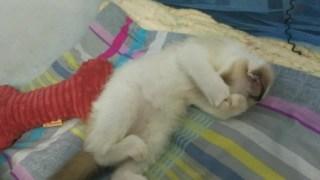 喵喵在梦里梦到了什么好吃的?