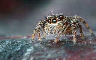 可怕,疣蛛竟然进入了我的房间@你敢来,我就敢养