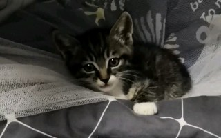 宿舍悄悄地溜进了一只碰瓷的流浪猫