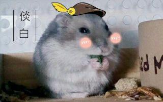 【鼠坨的日常】论一坨仓鼠的揉捏手感~