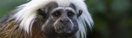Image for 6 Newly Arrived Monkeys Die At Zoo