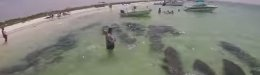 Image for WATCH: Just A Herd Of Manatees Passing Through