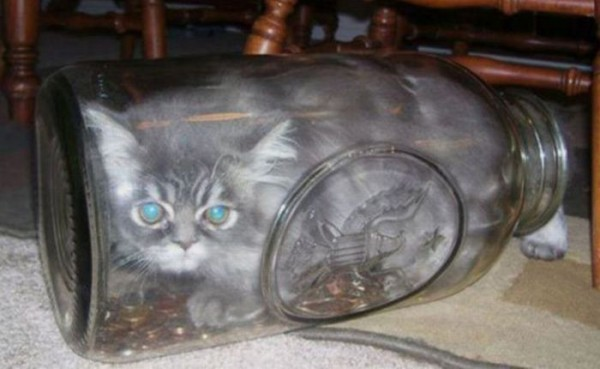 Вы не любите котов? Вы их просто не умеете..... - коты, приколы