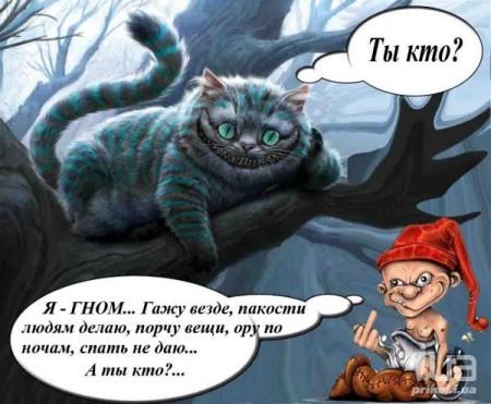 Анекдоты про котов в картинках и не только!