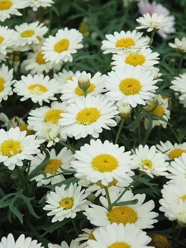 30種常用花材的花名與俗稱(下) - 每日頭條