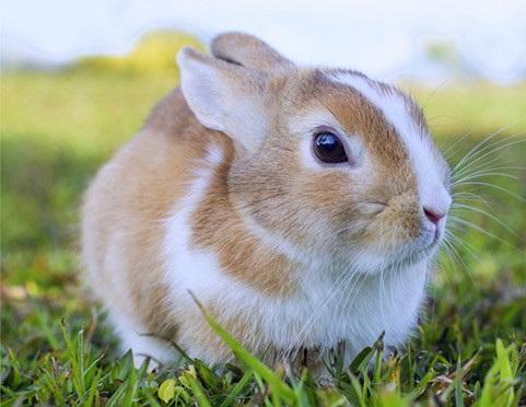 最受歡迎的兔子品種,你家的兔子上榜了嗎? - 每日頭條
