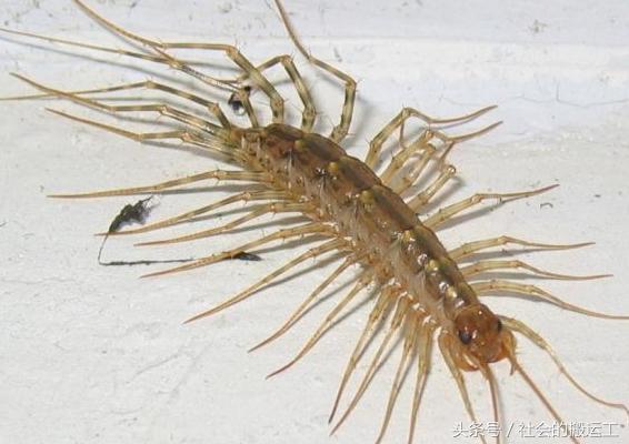 這些蟲子幾乎天天見,可惜名字你卻叫不出來 - 每日頭條