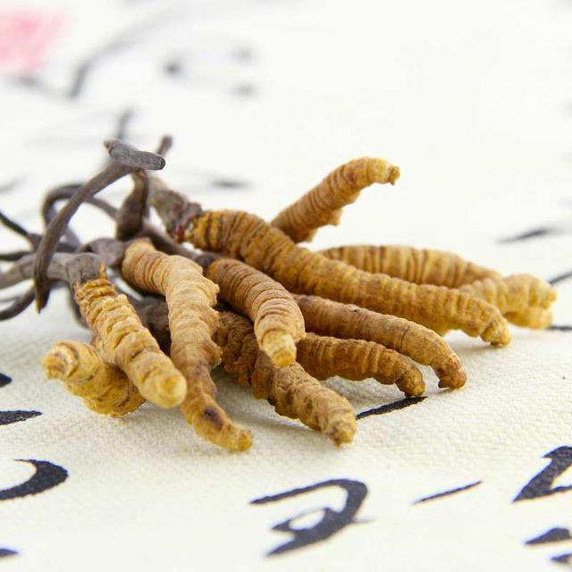 冬蟲夏草的食用宜忌和食材搭配 - 每日頭條