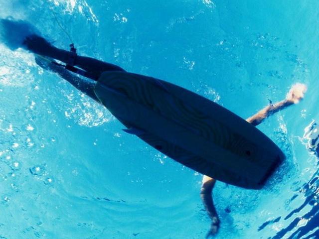 10大鯊魚攻擊人類的野性事實,淺灘受攻擊的可能性更大 - 每日頭條