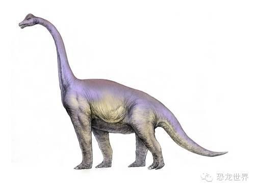 腕龍:侏羅紀的巨大草食性恐龍 - 每日頭條