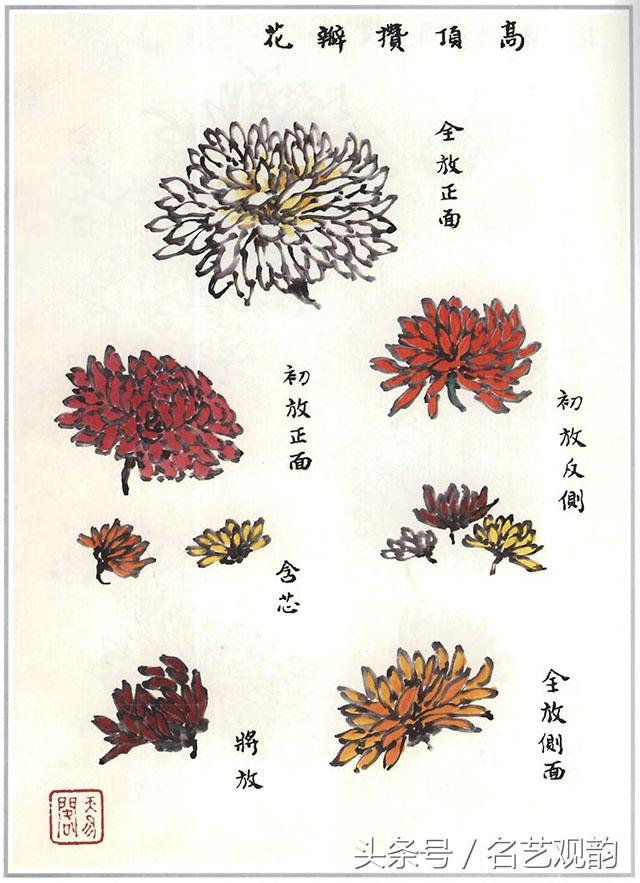 芥子園畫譜——《菊譜》 - 每日頭條