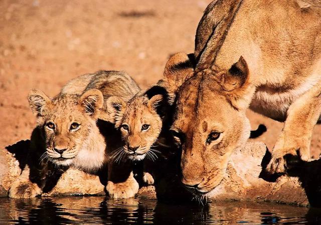 動物兇猛 | 你與非洲五霸只差一個克魯格國家公園 - 每日頭條