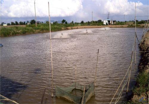 水質對水產養殖的影響和對策 - 每日頭條