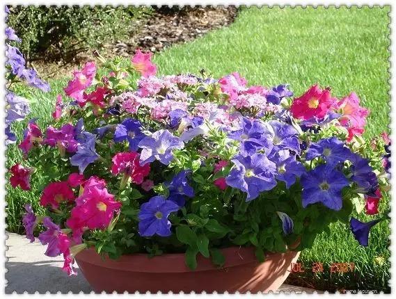 四月來臨!野外路邊常見104種植物你認識嗎? - 每日頭條