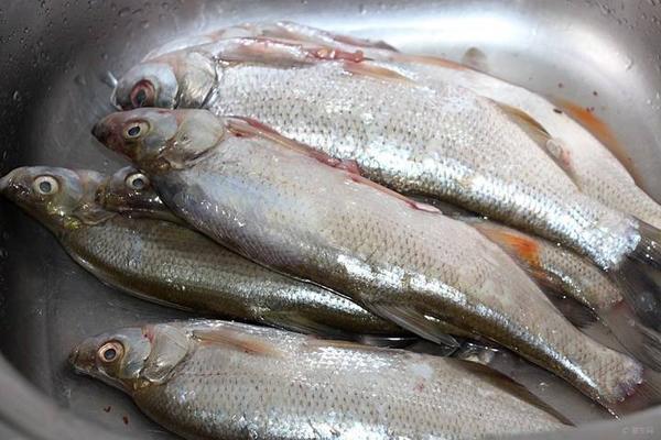 白條魚多少錢一斤 白條魚烹飪做法 - 每日頭條