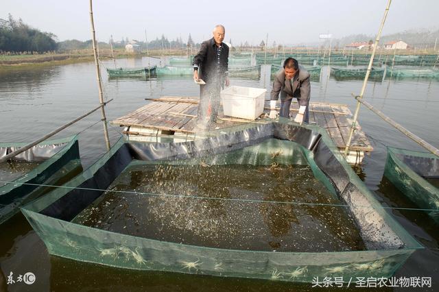 水產養殖監控系統的三大應用優勢 - 每日頭條