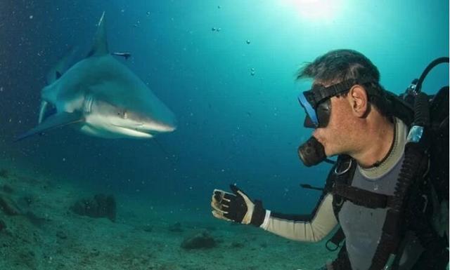 鯊魚吃人嗎?被鯊魚攻擊了就打它的鼻子嗎? - 每日頭條