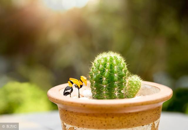 風水情報局:植物帶來好運氣,花開富貴,竹報平安 - 每日頭條