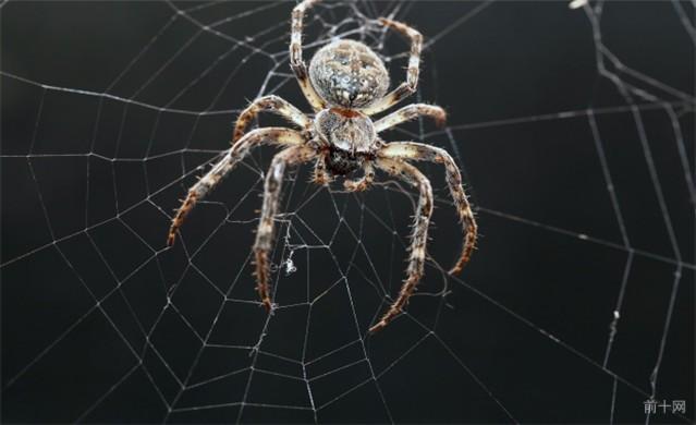 關於蜘蛛的10個錯誤看法 - 每日頭條
