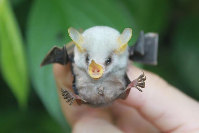 看了這些照片,也許會改變你對蝙蝠害怕的心理(14張) - 每日頭條