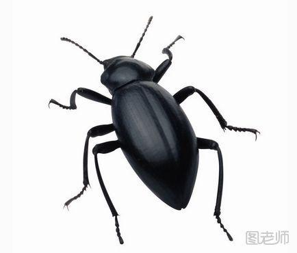 殺蟲小竅門有哪些?驅蟲的小妙招 - 每日頭條