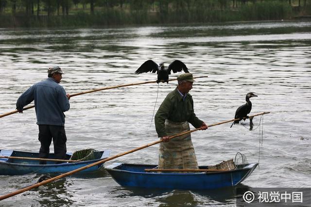即將消失的傳統!中國漁民使用鸕鶿捕魚 - 每日頭條