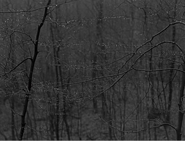 無法洞悉的攝影 讀羅蘭巴特《明室》後記 - 每日頭條