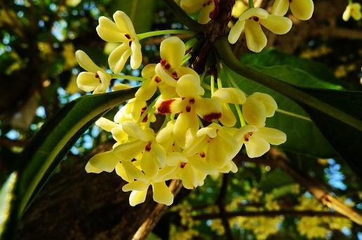 桂花開在什麼季節 一般桂花是在幾月開花 - 每日頭條