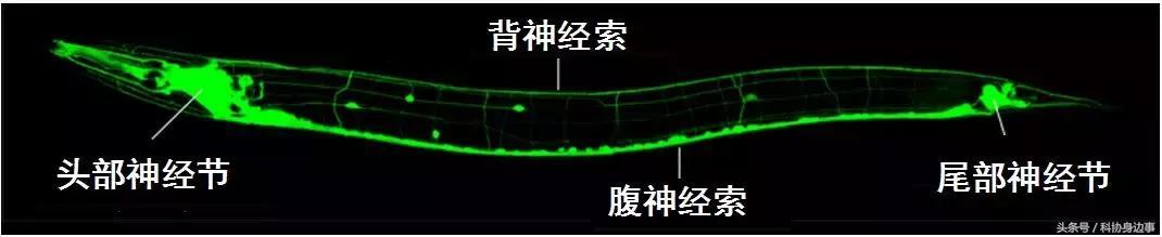 前沿科技解讀丨生命的顏色——螢光蛋白的發現與應用 - 每日頭條